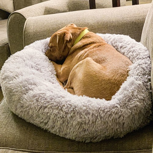 pug bed from peaceful pooch collection